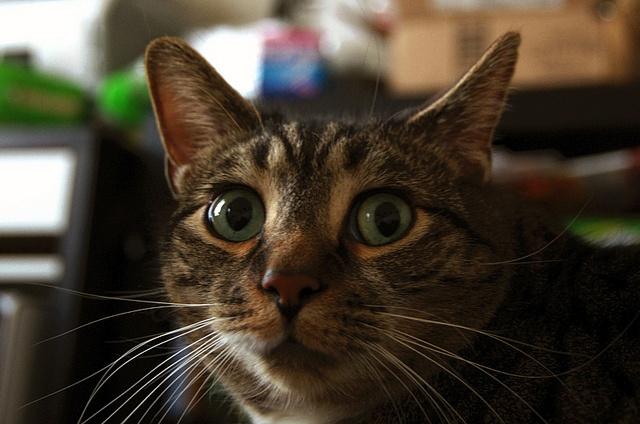 Wait, so it isn't #friday yet?! #cateyes #catsurprise