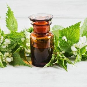 Nettle: A Treatment For Allergies, Pain, Prostate (BPH) And More - Reset.me