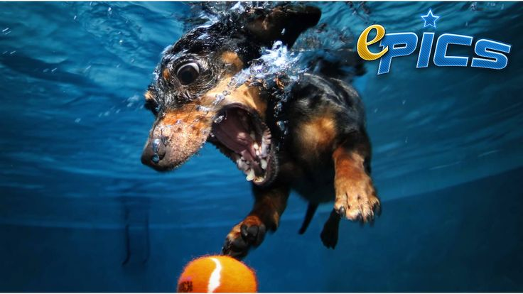 The MOST FUNNY Dogs Diving video ever