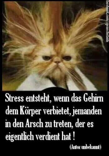 Haarsträubender Stress.