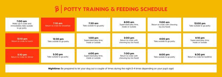Puppy Feeding Schedule 11 Feeding Tips Puppy Feeding Schedule