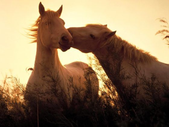 Horse Wallpaper Desktop Background (14)