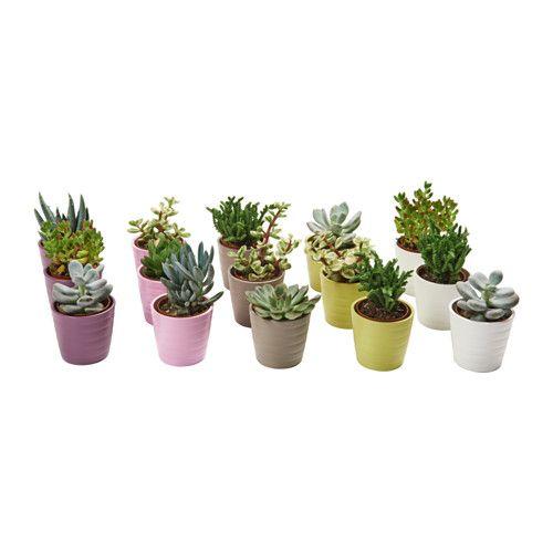 succulent planta con maceta ikea 4 3 decoration ideas pinterest. Black Bedroom Furniture Sets. Home Design Ideas