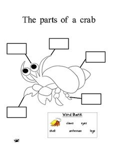 16 best Preschool Lesson on CRABS images on Pinterest