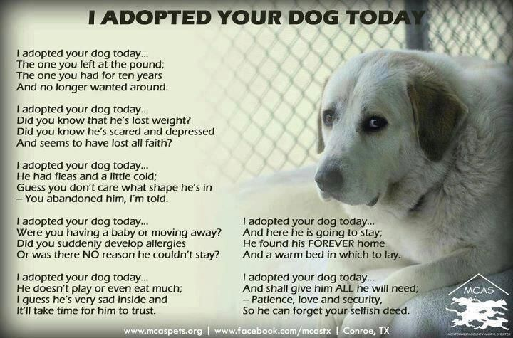 I Adopted Your Dog Today Poem