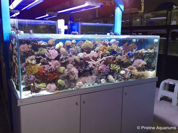 Salt Water Aquarium