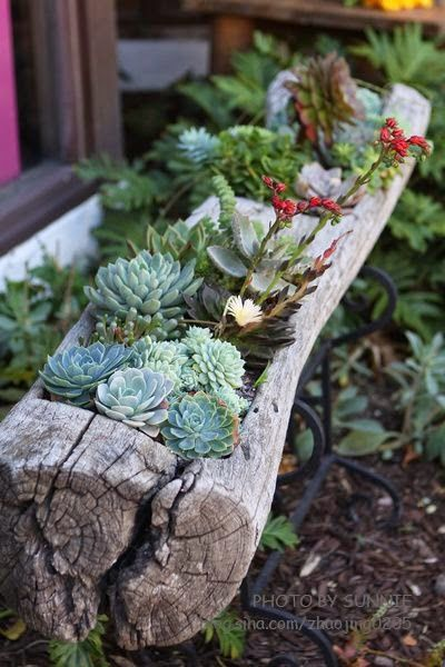 DIY Ideas: succulents in a log planter