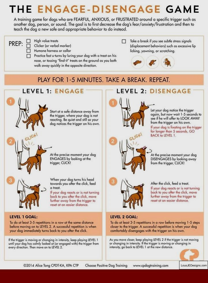 How To Train My Boxer To Be A Guard Dog And Pics Of How To Train
