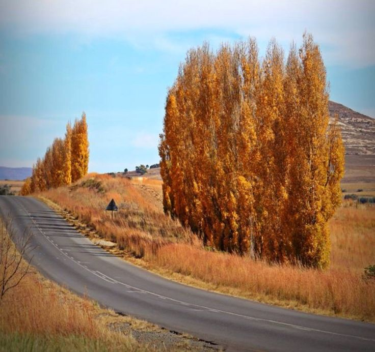 Autumn in Clarens- east Free state - South Africa
