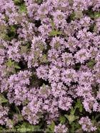 101 Best Images About Quot Perennials Quot Plants That Come