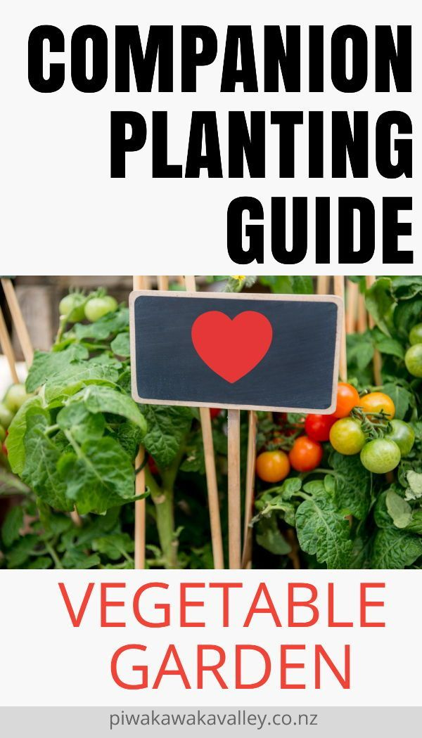 Pin On Gardening Advice