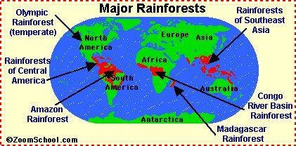Rainforest animals - information about animals found in the rainforest