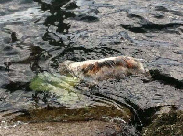 Venezia: il cane morto, che galleggia in acqua col sacchetto in testa