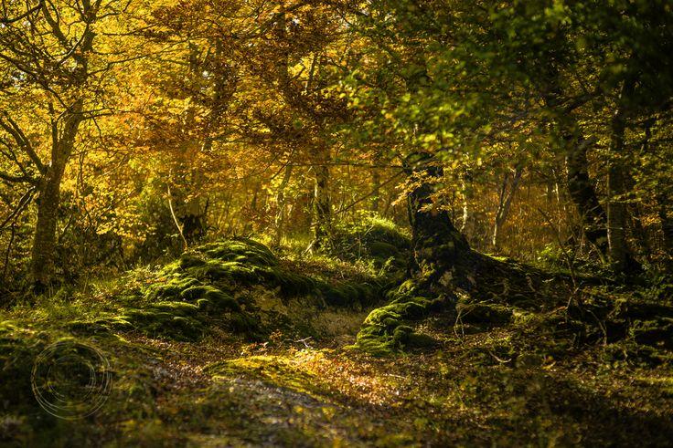 Simone Della Fornace Photography - Blog - Val Fondillo in Autumn #abruzzo #landscape #autumncolors #sonyalpha #autumn
