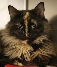 Capital Area Humane Society Adoption available.