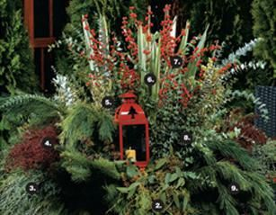 How To Make A Festive Lantern Planter For Your Winter Garden | Container  Gardening