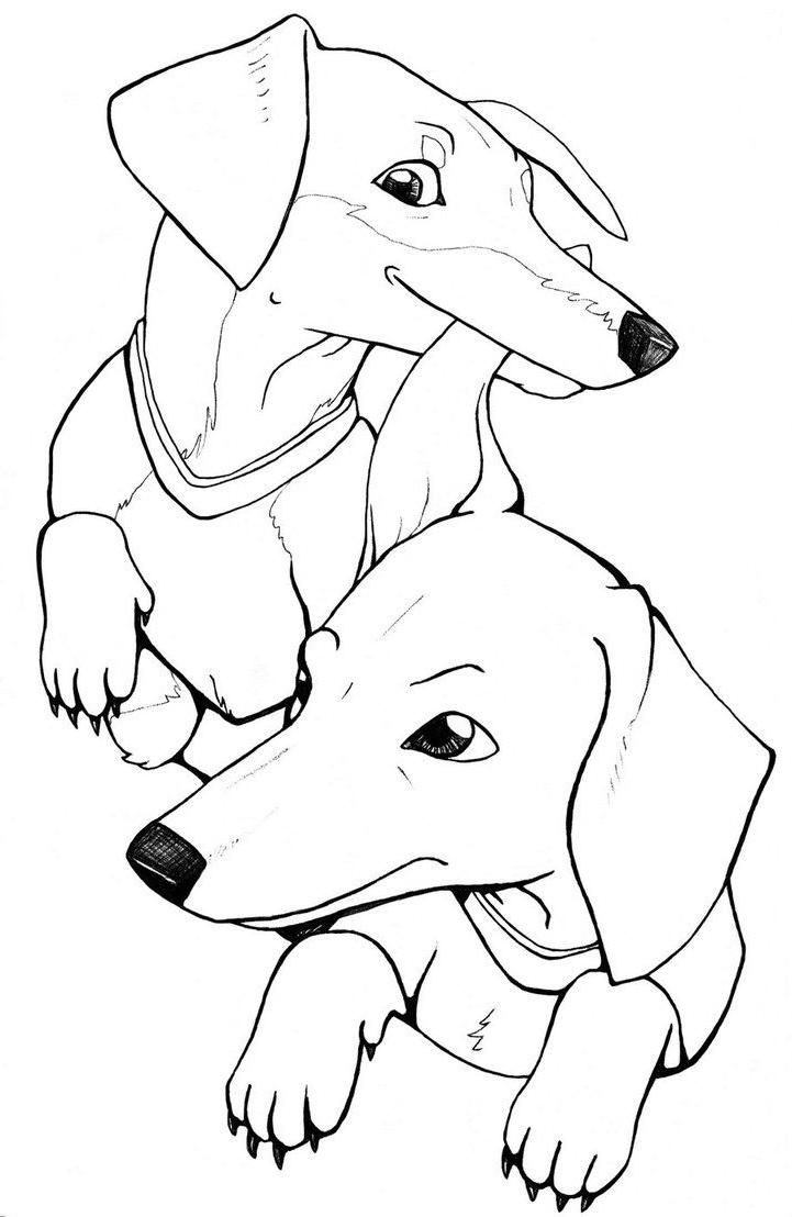 Dachshund Coloring Pages - Best Coloring Pages For Kids  Dog