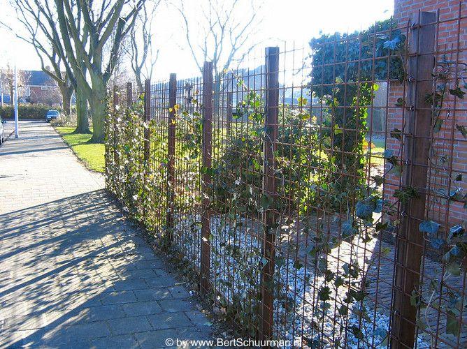 Wapeningsnet afsluiting tuin inspiration diy garden for Moderne afsluiting tuin
