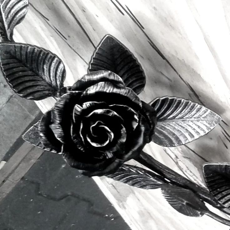 Moje růže