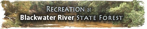 Recreation Areas at Blackwater River State Forest: Florida Forest Service - FDACS  Bear Lake