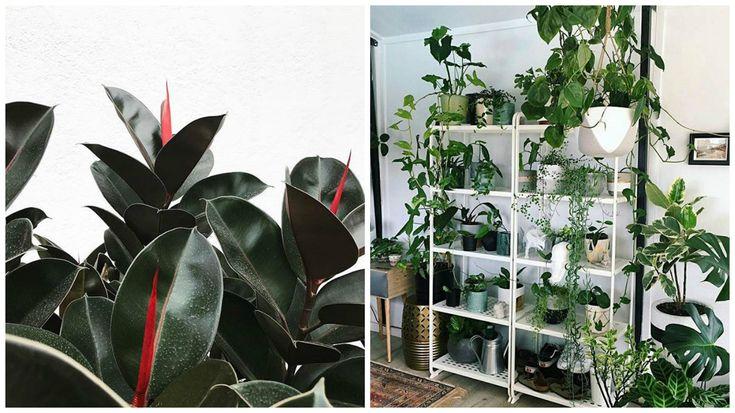 MULIG stellingkast IKEA, super geschikt voor planten en natte ruimtes