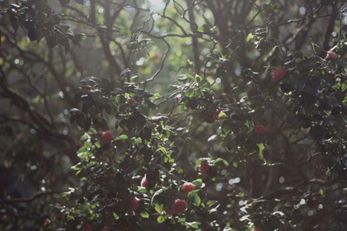 heidi swanson: Foodblog