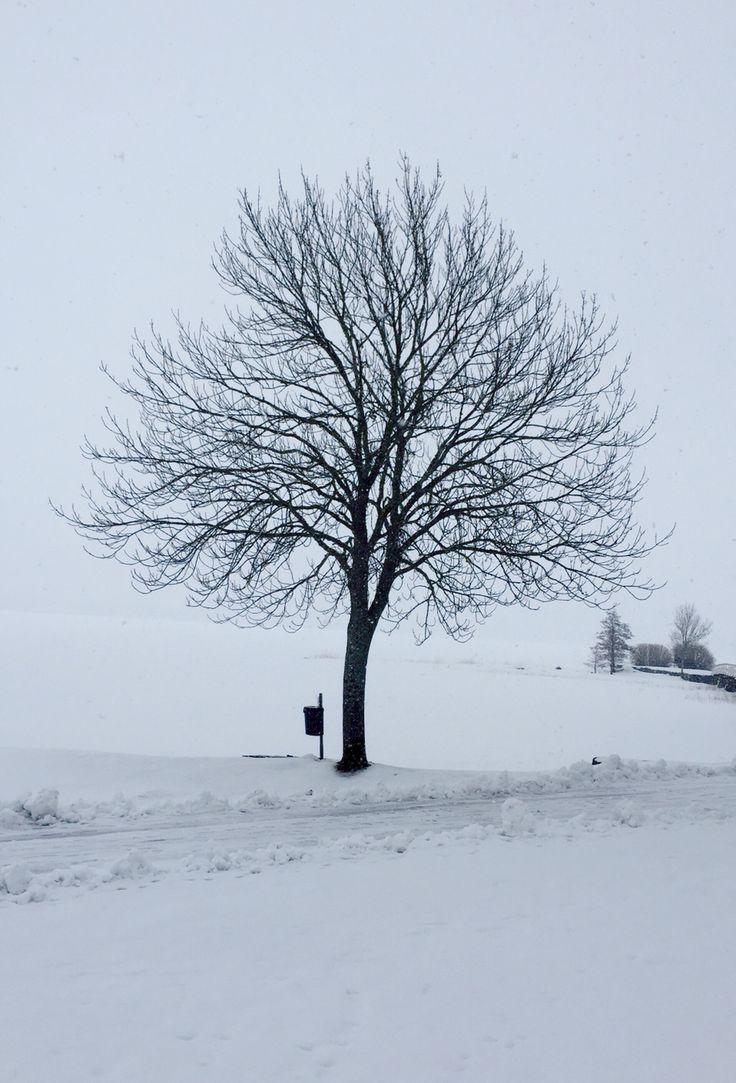 Winter in Östhsmmar