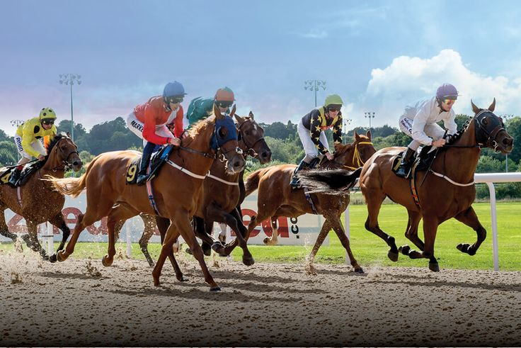 Horse Racing Newsletter | Betting Gods created by Tom Nelson, Professional Sports Tipster