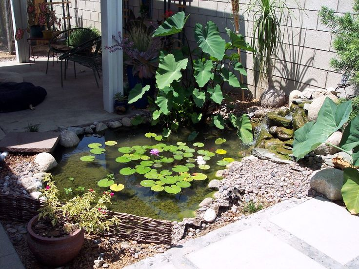 Best 25 small backyard ponds ideas on pinterest small for Small garden ponds with waterfalls