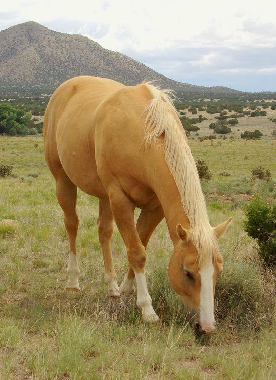 Palomino horse - Equine photography