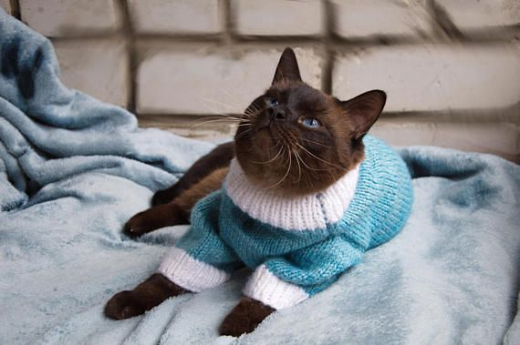 Hand Knitted Warm Blue White Sweater For Cat Cat Clothes Warm Hand Made Knitted Sweater Cat Pullover V 2020 G Vyazanie