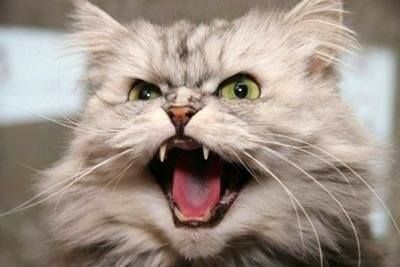 You made the cat angry. You do NOT want to make the cat angry!