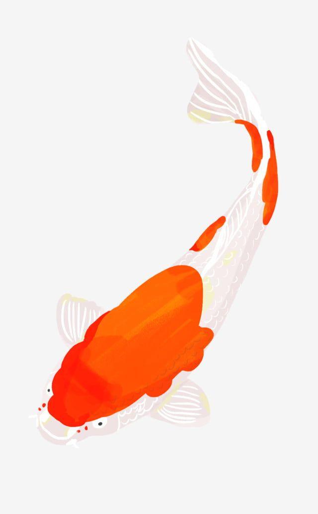 كوي الذهبي السمك فنغ شوي سمكة محظوظ كوي Png و Psd Feng Shui Fish Wind Sock Koi