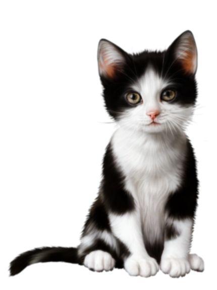 Iphone X Inspired Wallpapers Cute Kitten Transparent Clip Art Kittens Cutest Clip