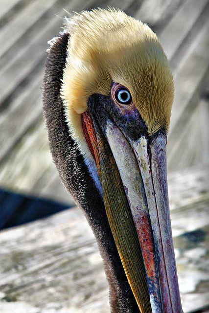 Pelican. Reminds me of Louisiana :)