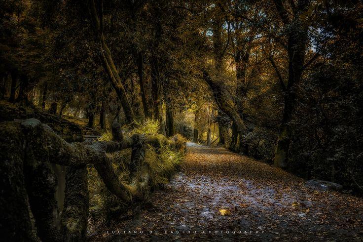 Sanctuary Garden Path - Caminho na floresta do Parque de Bom Jesus em Braga, Portugal. Este parque natural belíssimo se encontra numa colina atrás Santuário do Bom Jesus do Monte.