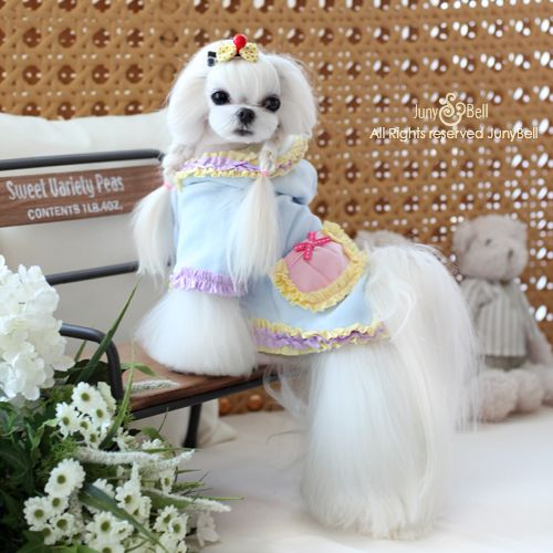 Upscale Designer Dog Apparel From Around The World For Teacup, Toy, And  Small Breed Dogs.