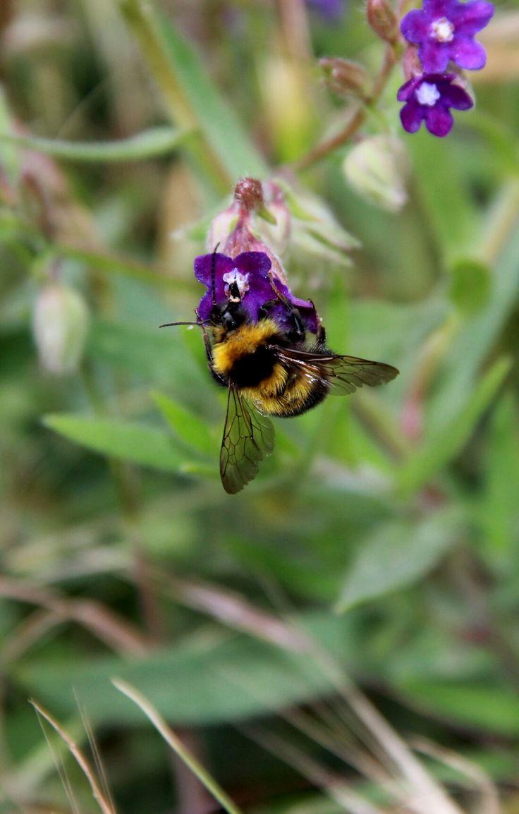 Een hommel. Gemaakt voor een workshop. Gemaakt vorig jaar in juni.  Als bumblebee. Taken for a workshop. Made this last year in June  Taken with: Canon EOS 60D