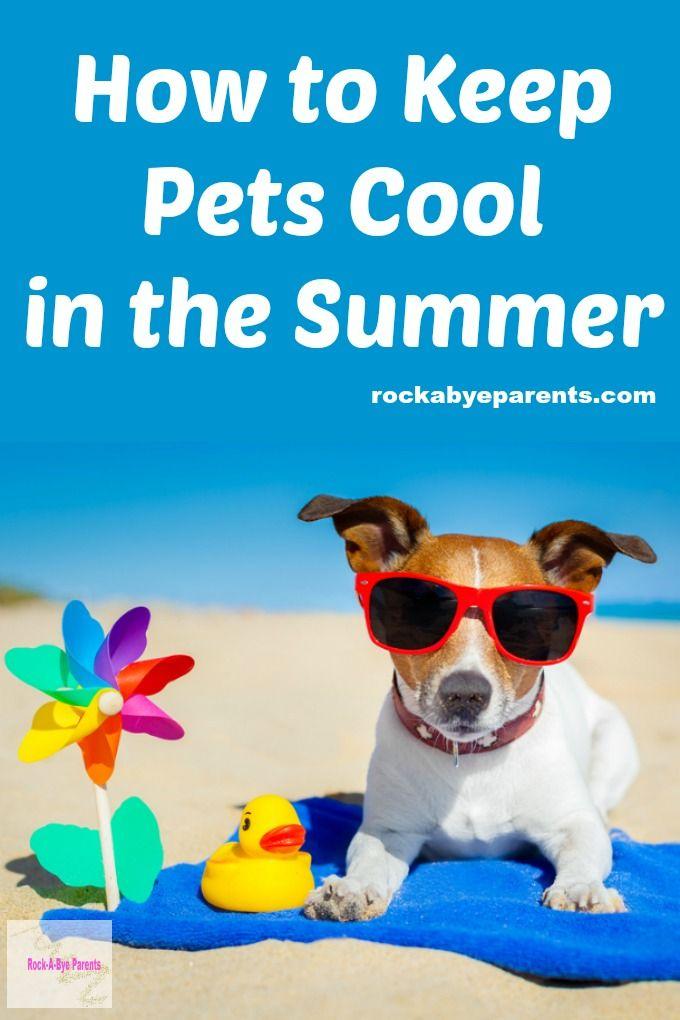 It is so important to keep pets cool in the summer. These 6 tips will help your cat and dog beat the heat. Plus it includes the signs to look for if you suspect heatstroke.