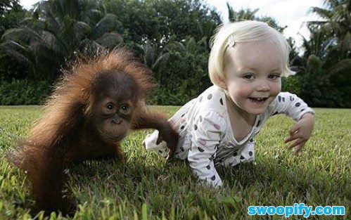 Learn Crawling With My Buddy #humor #lol #funnyLittle Girls, Funny Children, Animal Pictures, Funny Pics, Monkeys, Friendship, Funny Animal, Funny Kids, Baby Orangutan