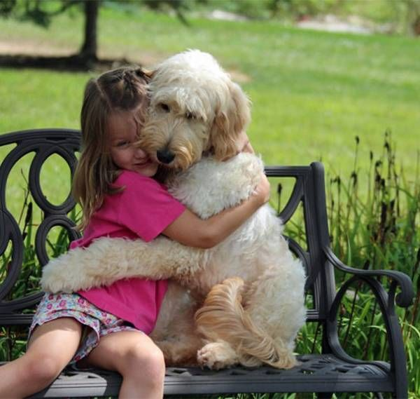 Dogs Hugging Their Humans
