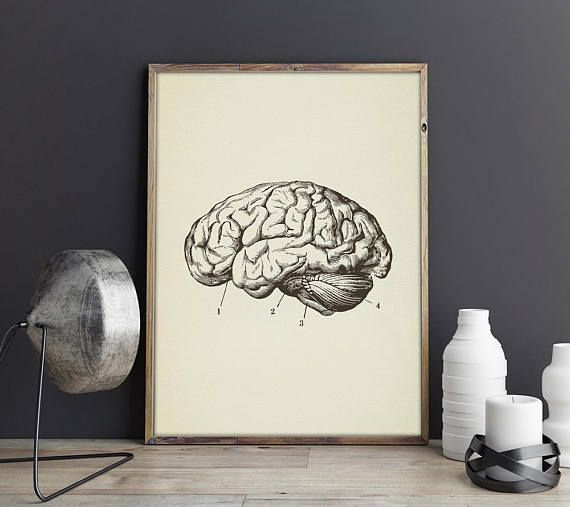 Brain Art, Anatomy Brain Print Art Vintage, Human Cerebrum Wall Art, Digital Download Drawing, Large Poster Medical  Doctor Gifts; Christmas Xmas lat minute gifts