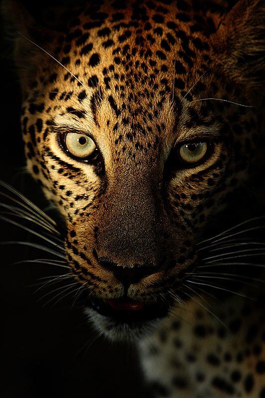 Safari Leader's Amazing Expeditions (22 photos) - My Modern Metropolis
