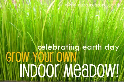 Grow an indoor meadow - great for Earth Day and small world / imaginary play
