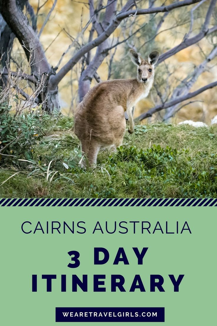3 DAY ITINERARY FOR CAIRNS, AUSTRALIA: Cairns is often overlooked on a trip to Australia, but it shouldn't be! See why you should visit and what to do in the city and the surrounding areas in this post. By Sarah Latham for WeAreTravelGirls.com