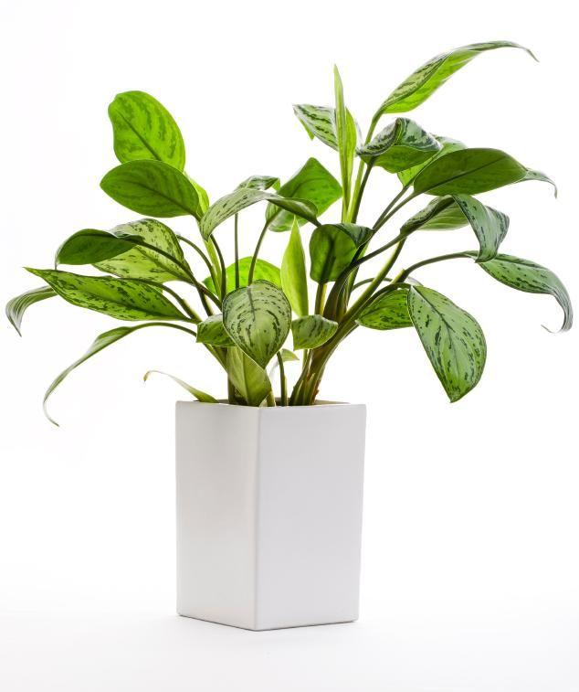 292 Best Plants Images On Pinterest House Plants Indoor