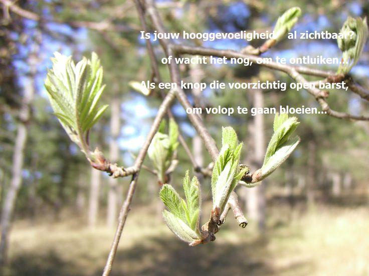 Evenwicht, hooggevoeligheid, hoogbegaafdheid. Meer op www.facebook.nl/hooggevoeligheelgewoon en www.hooggevoeligheelgewoon.nl