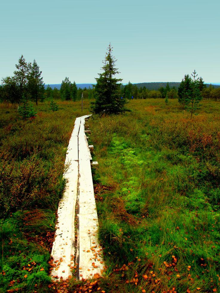 Hikingtrail, Pallas-Yllästunturi National Park
