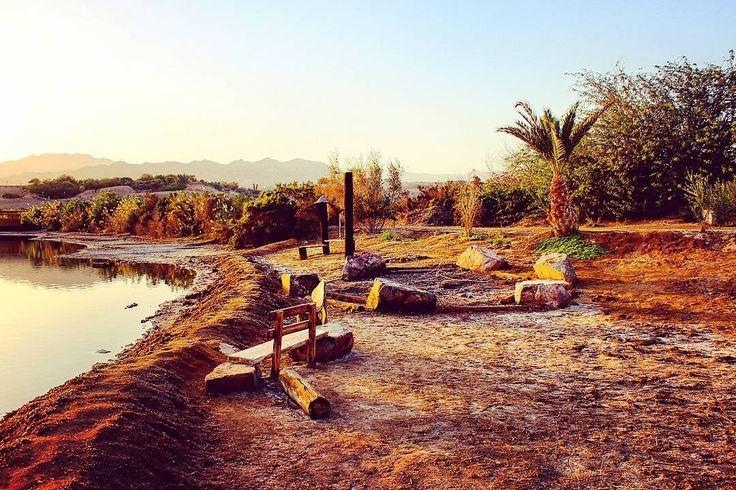 #Israel #Eilat #IsraelSouth #RedSea #Израиль #Flowers  #КрасноеМоре  #Эйлат #Hotel #Holidays #Sun #Солнце  #Юг #אילת  #Lake #Desert #Negev  #Негев #Palms #Пальмы #Południe #Palmy #Morze #Słońce #Nurkowania #Pustkowie #Freediving  #Diving  #Isrotel  #hotelisrael eilat-il.com |  freediving.eilat-il.com