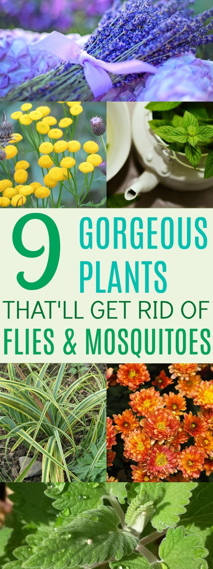 These 9 Plants Totally CUTE and effective! I love having multi-purpose plants around my home!